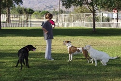 dog park in indian wells